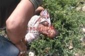 """ارتفاع عدد ضحايا كارثة """"قطارى"""" الاسكندرية الى 29 شخص"""