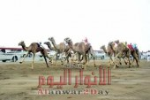 محافظة الشرقية تستعد لإطلاق فعاليات مهرجان الشرقية التاسع للهجن العربية