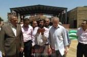 الدالي: توريد 113ألف طن قمح على مستوى محافظة الجيزة حتى الآن…صور