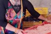 بالصوربعد ضبط 70 طن مفروم دجاج نافق ولنشون وسجق بدم الخنافس طبيبة تحذرمن مطاعم تستخدم الدجاج الميت في عمل الكفتة والكريب الجاهز والحوواشي