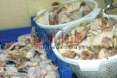 ضبط لحوم ودجاج فاسد باكبر محلات ومطاعم بالفيوم