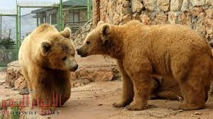 """""""حيوانات جديدة و9 منافذ للتذاكر"""".. حديقة الحيوان تستعد لعيد الأضحى"""