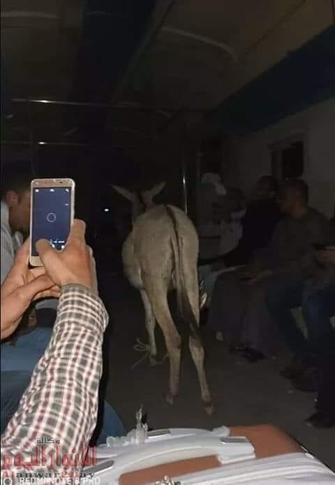 حمار قطار نجع حمادي الأقصر – قنا